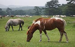 Cao xương ngựa đảo Jeju Hàn Quốc - món quà cho sức khỏe